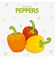 peppers sweet vector image