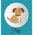 pets design vector image vector image