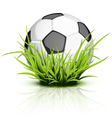 soccer ball grass vector image vector image
