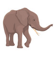 elephant isolated vector image vector image