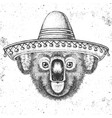 hipster animal koala wearing a sombrero hat vector image