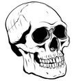 outline graphics skull in vector image vector image