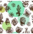 succulents and cactuses vector image vector image