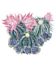 t-shirt print with pink blooming cactus succulent vector image vector image
