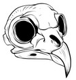 with bird skull hand drawn vector image