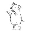 contour line drawing funny pig hand-drawn vector image