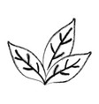 tea leaf plant vector image