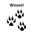 weasel footprint vector image vector image