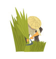 asian farmer in straw conical hat harvesting rice