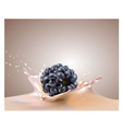 blackberry and milk vector image vector image