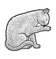 cat grooming line art sketch vector image vector image