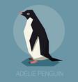 flat adelie penguin vector image vector image