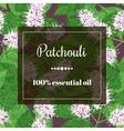 patchouli essential oil vector image vector image