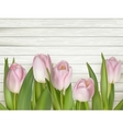 pink tulips over white wood table eps 10 vector image vector image