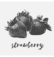 Strawberry organic vegan vector image