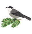 wild birds canada gray jay a vector image vector image