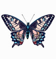 beautiful hand drawn pink blue butterfly vector image