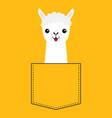 llama alpaca face head in pocket cute cartoon vector image vector image