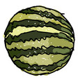 big watermelon on white background vector image vector image