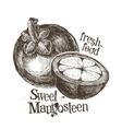mangosteen logo design template fresh fruit food vector image vector image