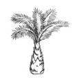 palm tree sabal minor miami palmetto ink vector image vector image