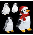 Three images of a penguin and a penguin Santa vector image