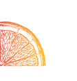 fresh ripe slice of orange on white vector image
