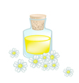 White Yarrow Blossoms with Essential Oil vector image