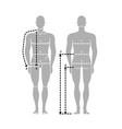 man body measurement chart taking measurement vector image vector image