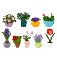 potted flowers set isolated blooming potted plant vector image