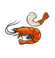 prawn or shrimp vector image