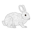 adult antistress coloring rabbit hare animal vector image vector image