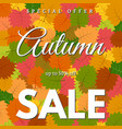 autumn leaves and an inscription autumn sale vector image vector image