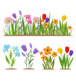 early spring forest and garden flowers isolated on vector image vector image