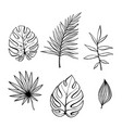 hand drawn branches and leaves of tropical plants vector image vector image