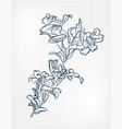 lily japanese sketch engraved chinese vector image vector image