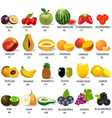 set amount calories in fruit on white vector image vector image
