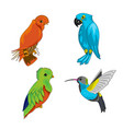 Set of exotic birds
