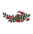 isolated clipart rose hips vector image
