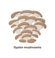 oyster mushrooms isolated on white background vector image vector image