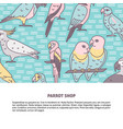 parrots colored background in line style with vector image