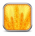 Square icon with ear wheat vector image vector image