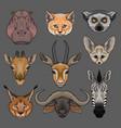 head of wild animals set portrait of hippo lynx vector image