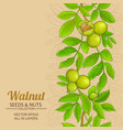 walnut branches pattern on color background vector image vector image