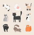 fluffy funny cats vector image vector image