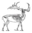 irish elk vintage vector image vector image