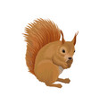 squirrel wild northern forest animal vector image vector image