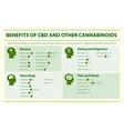 benefits cbd and other cannabinoids horizontal vector image vector image