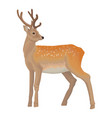 deer wild northern forest animal vector image