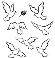 flight of dove vector image vector image